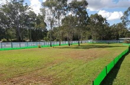 A photo of the trees to be removed as part of the Ewen Maddock Dam upgrade project
